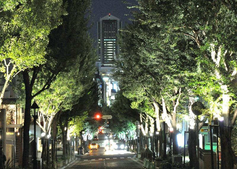 街路樹のライトアップが連続するダイナミックな見通しのビュー