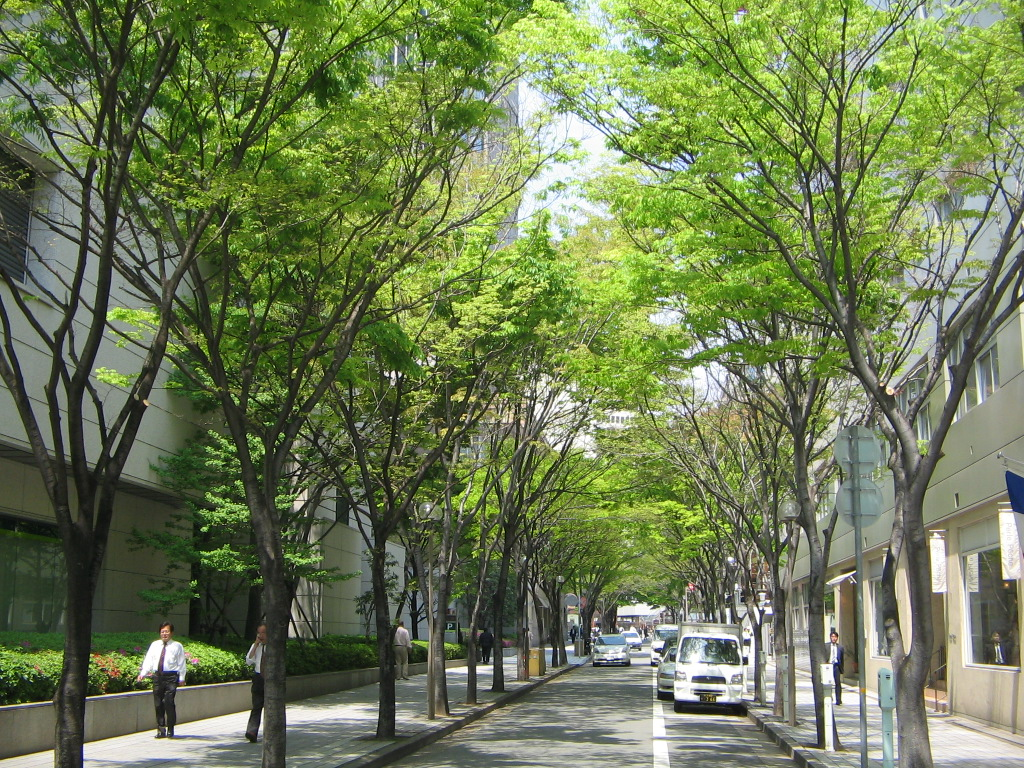 神戸市:神戸の街路樹